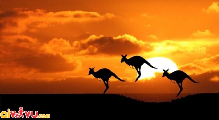 Du lịch Úc luôn là lựa chọn hàng đầu của các tín đồ du lịch