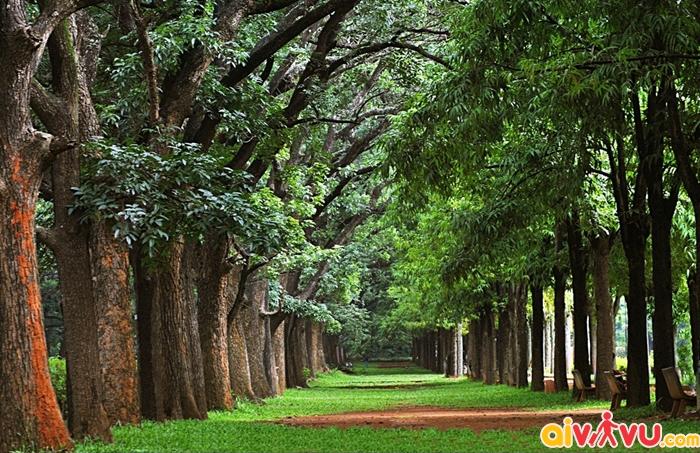 Khoảng xanh trong công viên Cubbon