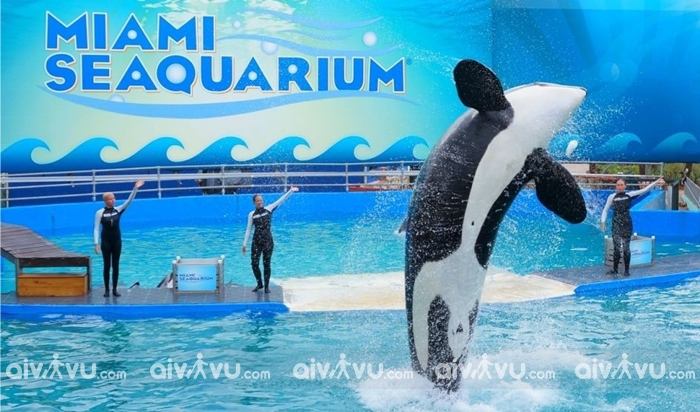 Thủy cungMiami Seaquarium - Miami