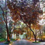 Cảnh sắc thiên nhiên ở Vườn Bách thảo Singapore