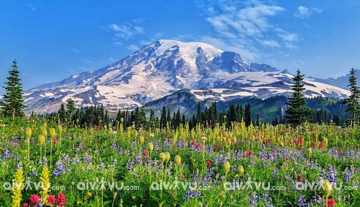 Công viên quốc gia Rainier – Seattle