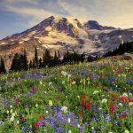 Công viên quốc gia Rainier