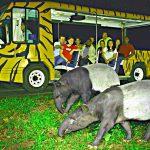 Tìm hiểu đời sống động vật tại Vườn thú Night Safari