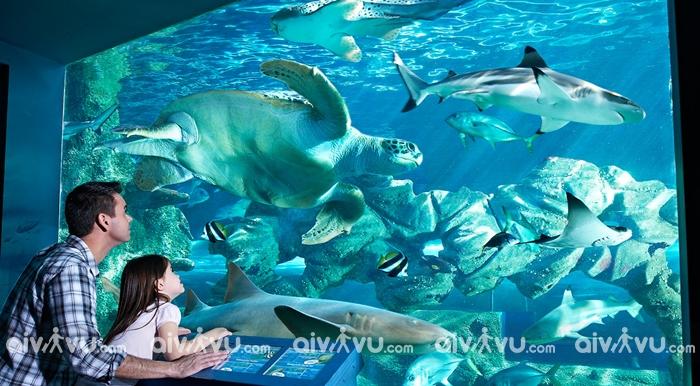 Oceanarium địa điểm thú vị tại Manila