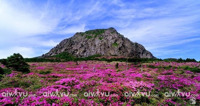 Hallasan ngọn núi biểu tượng ở Jeju