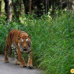 Vườn Quốc gia Bannerghatta là nơi du khách được tiếp xúc với nhiều loài động vật hoang dã ở khoảng cách gần
