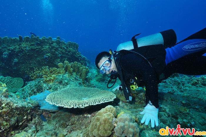 Lặn biển - trải nghiệm tuyệt vời ở Boracay