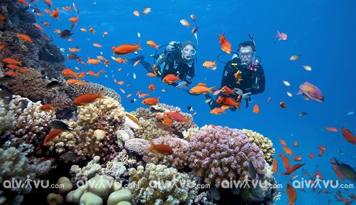 Lặn biển ở Scuba trải nghiệm yêu thích của du khách đến với Boracay
