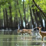 Rừng sinh thái Sundarban