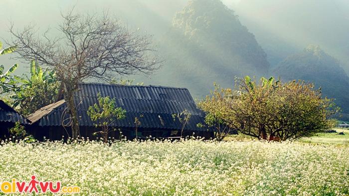 Mộc Châu mùa thu đẹp đến nao lòng