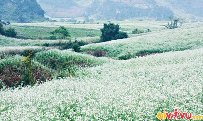 Cánh đồng hoa cải đẹp như mơ của núi rừng Sơn La