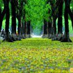 Đường Phan Đình Phùng lãng mạn với lá vàng rơi