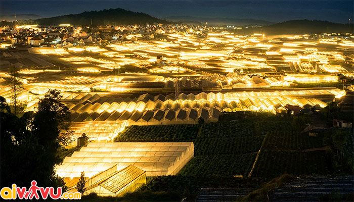 Thung lũng ánh sáng tại làng hoa Thái Phiên