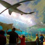 Thủy cung Ripley's Toronto Aquarium với đa dạng các loài dưới đại dương