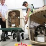 Vận chuyển động vật trên khoang máy bay