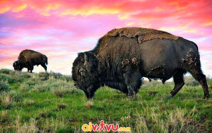 Ghé thăm công viên quốc gia đầu tiên ở Mỹ