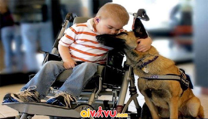 Hỗ trợ chó dãn đường cho người khiếm thị