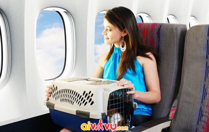 Thủ tục đăng ký dịch vụ vận chuyển động vật Vietnam Airlines