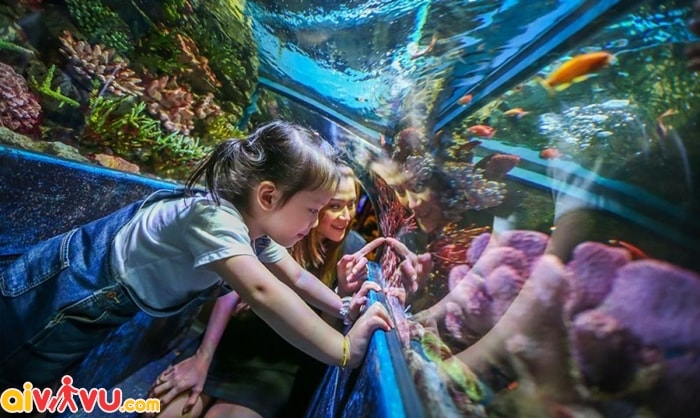 Du lịch SEA LIFE Bangkok Ocean World