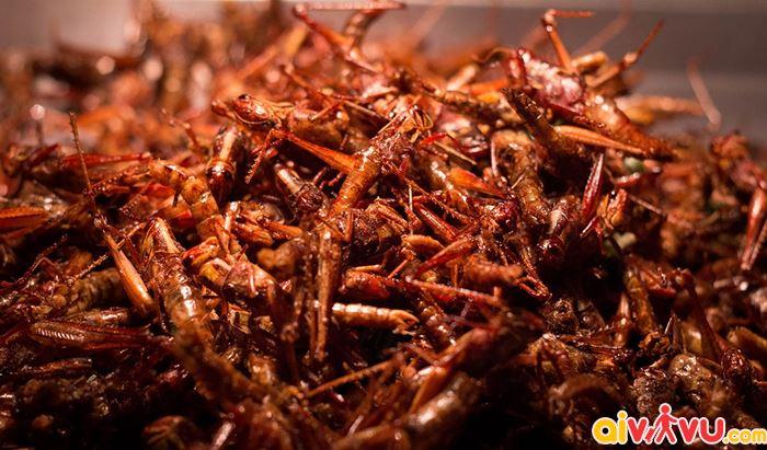 côn trùng rán