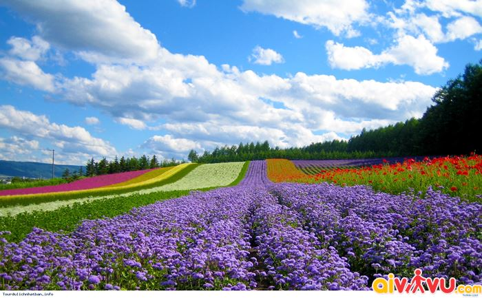 Thiên đường hoa