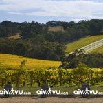 Thung lũng Clare, Nam Úc