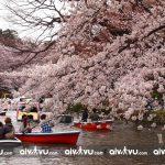 Ngắm cảnh Tokyo bằng cách đi thuyền trên sông
