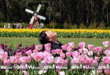 Lễ hội hoa Tulip