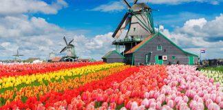 Lễ hội hoa Tulip, Hà Lan độc đáo trong tháng 4