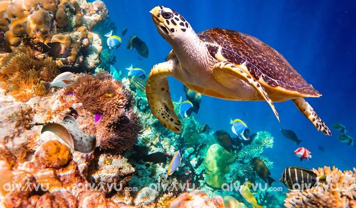 Lặn biển ngắm san hô tại Côn Đảo