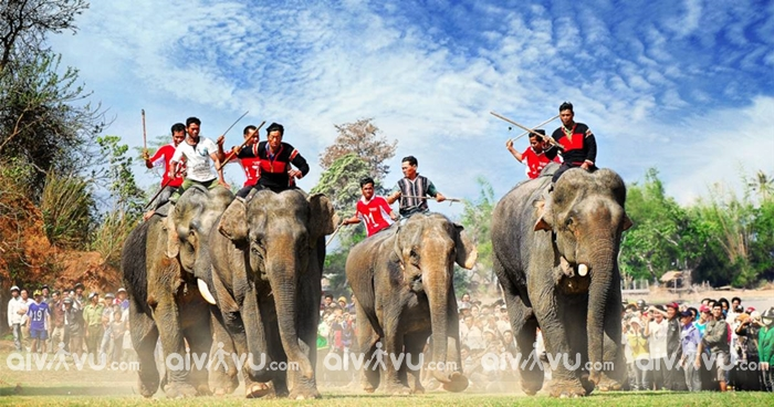 Lễ hội đua voi - Tây Nguyên