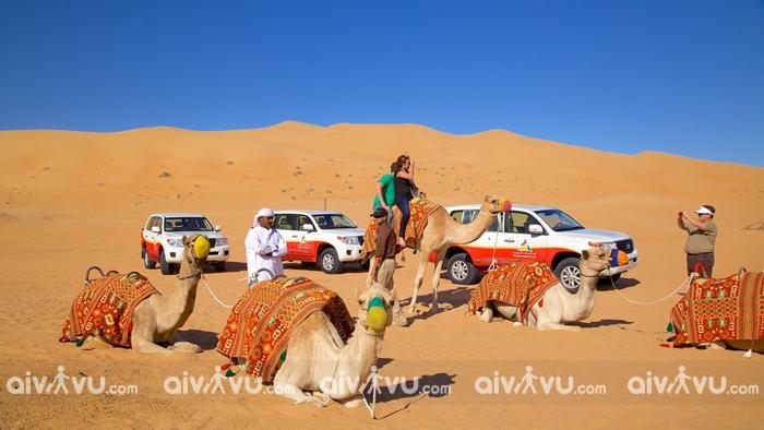 Cưỡi lạc đà một trải nghiệm thú vị khi đến Sa mạc Dubai
