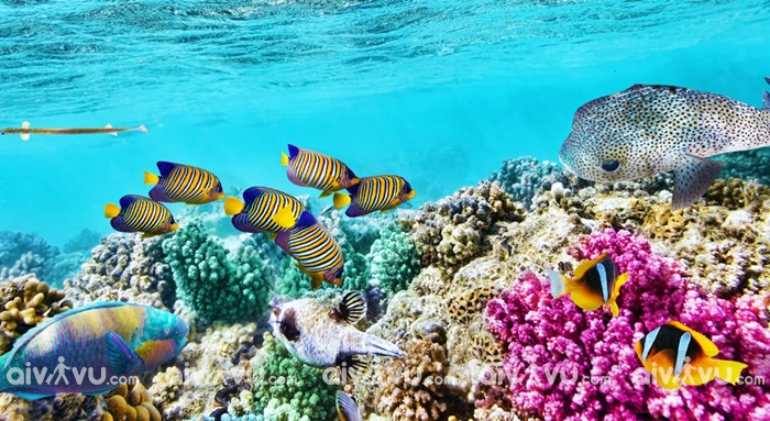 Ngắm san hô tại Vịnh Moreton Brisbane