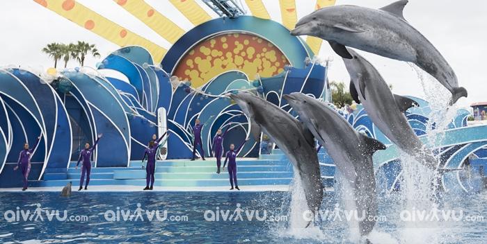 Công viên chủ đề Sea World Gold Coast