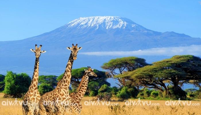 Công viên quốc gia Nairobi