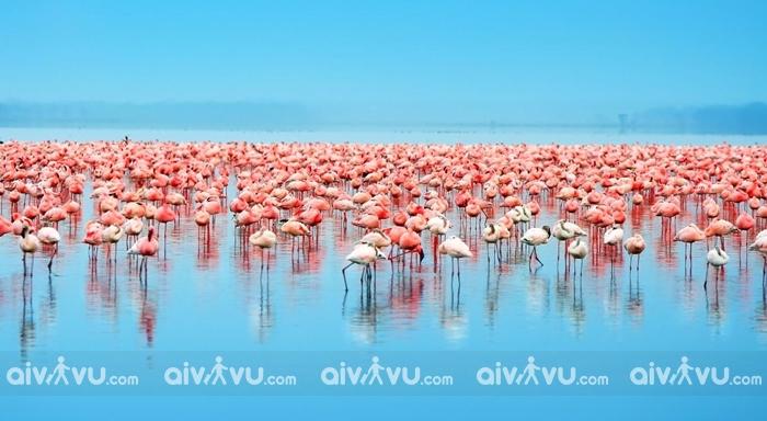Hồ Nakuru hồ nước mặn tự nhiên lớn nhất tại Kenya