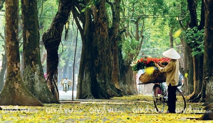 Đón thu quyến rũ tại Hà Nội