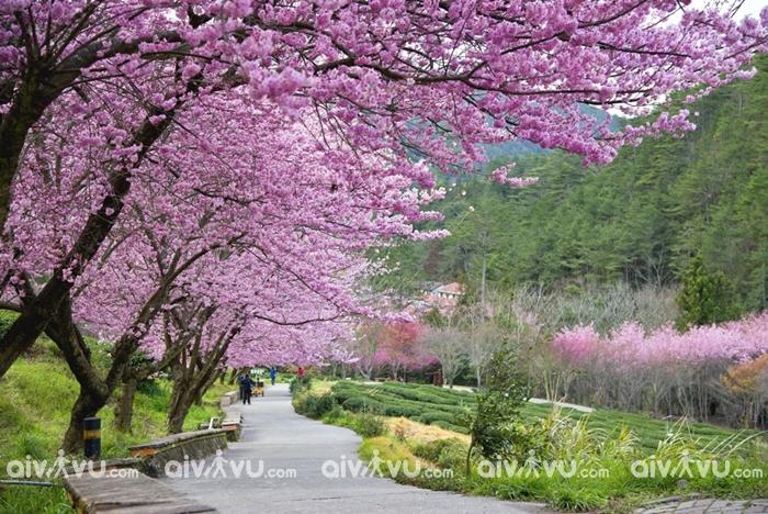 Có nên đi du lịch Đài Loan dịp Tết Nguyên đán 2020?