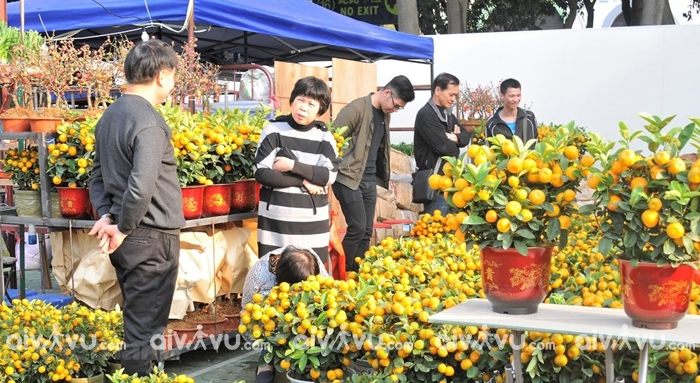 Chợ hoa nhộp nhịp khi du lịch Hong Kong dịp Tết Nguyên đán