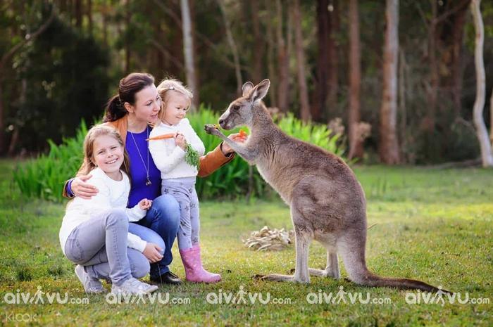Bảo hiểm du lịch Châu Úc