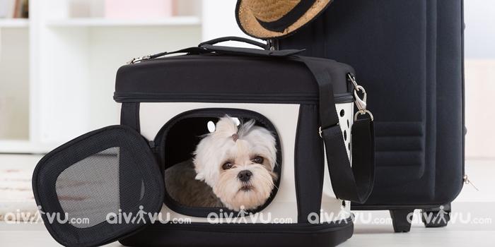 Động vật cảnh mang theo trên khoang hành khách