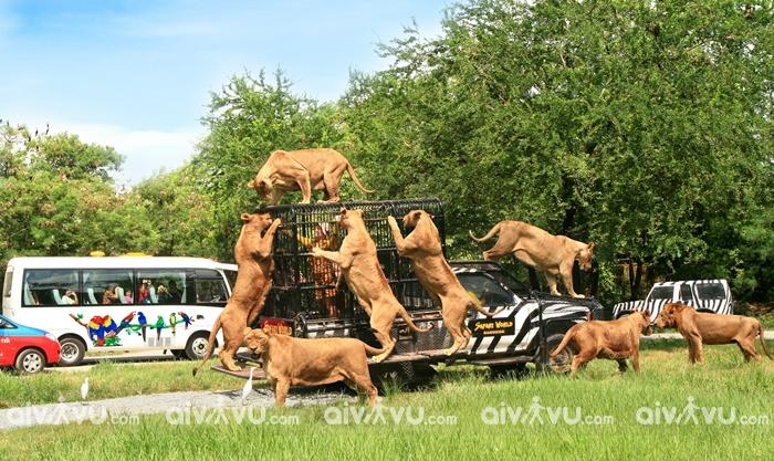 Công viên Safari Thâm Quyến