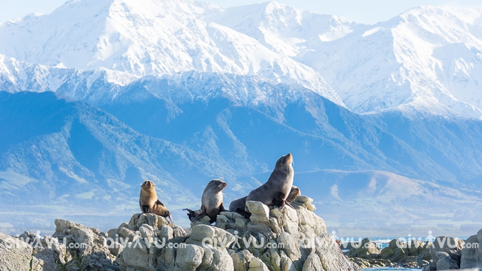 Kaikoura - New Zealand