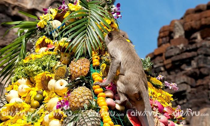 Điều lạ lùng ở Thái Lan với lễ hội buffet dành cho khỉ
