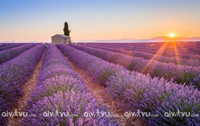 Lạc vào xứ sở hoa ở Pháp