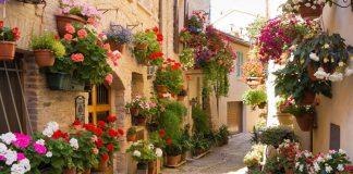 Những loài hoa – niềm tự hào của người dân nước Pháp