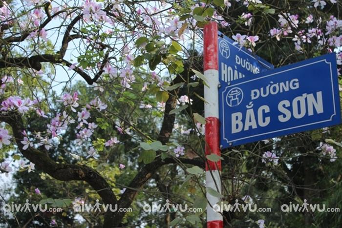 Những nhành hoa ban tím len lỏi giữa lòng thủ đô
