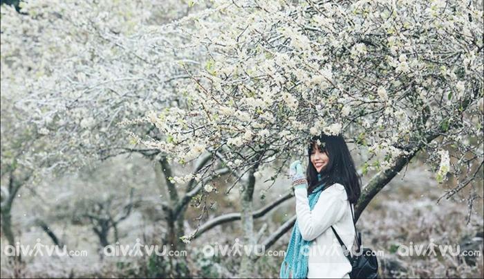 Núi rừng Tây Bắc tháng 3 đẹp ngỡ ngàng với mùa hoa ban nở ở Mộc Châu