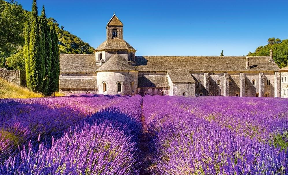 6 cánh đồng hoa oải hương nổi tiếng nhất hành tinh