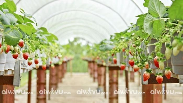 Khám phá trời Âu với 5 nông trại tuyệt đẹp tại Đà Lạt